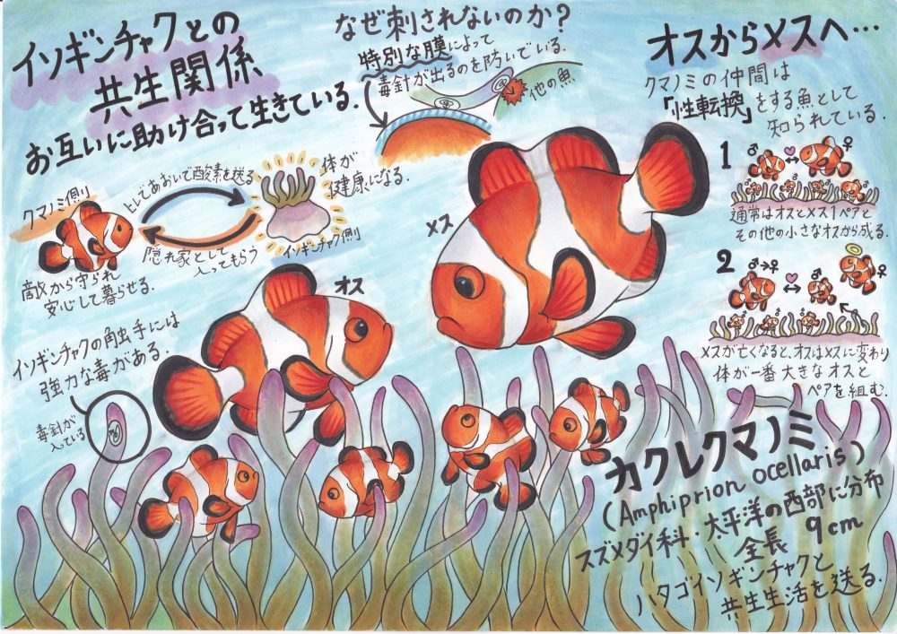 カクレクマノミの生態について ファーストアクアリウム株式会社 熊本 アクアリウム水槽の販売 メンテナンス